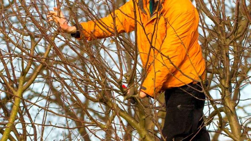 Obstbaume Richtig Schneiden Seminar In Der Eichmuhle Hersfeld