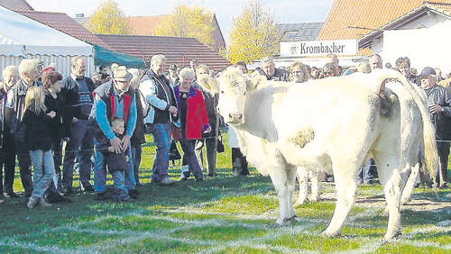 Almabtrieb mit Kuhlotto in Philippinenburg