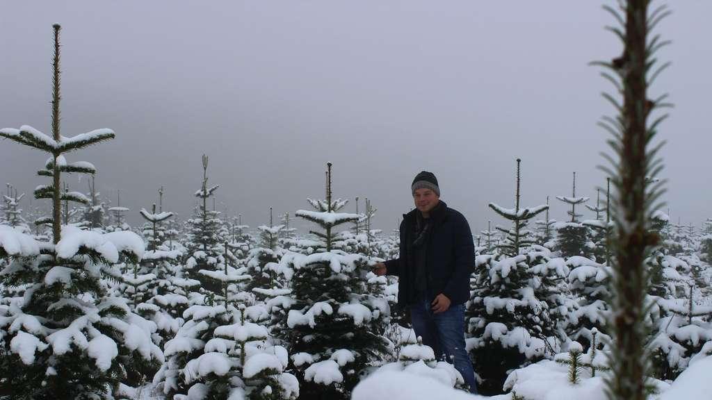Weihnachtsbaume selber schlagen vogelsberg