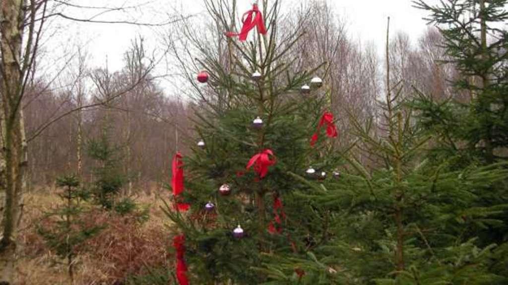 tannen kauf reinhardshagen forstamt weihnachtsbaum. Black Bedroom Furniture Sets. Home Design Ideas