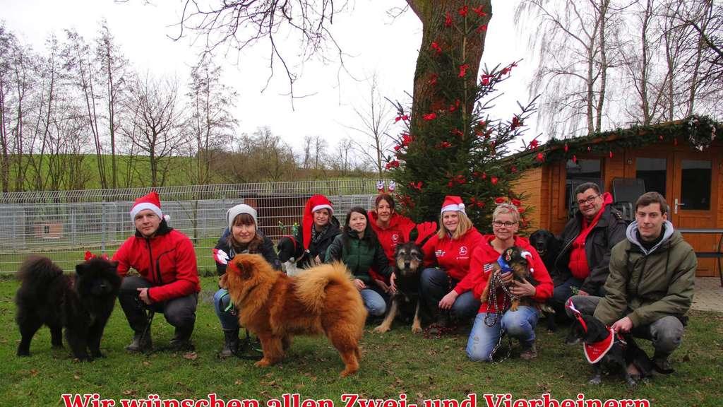 Warum Gibt Es Weihnachten.Tierheim Beuern Gibt Rund Um Weihnachten Und Silvester Keine Tiere